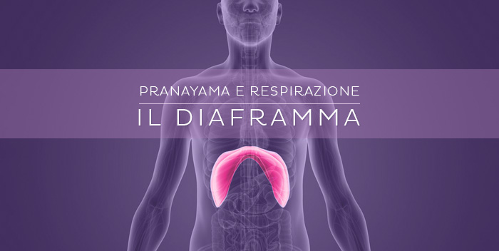 Respirare con il diaframma: il muscolo del respiro consapevole